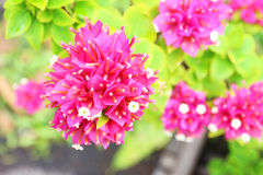 De achtergrond van de bloem Royalty-vrije Stock Afbeelding
