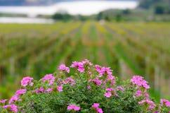 De achtergrond van de bloem Royalty-vrije Stock Fotografie