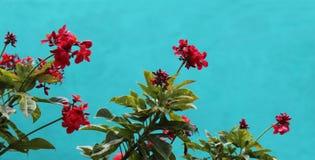 De achtergrond van de bloem Royalty-vrije Stock Foto