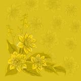 De achtergrond van de bloem, narcissuses gele (48) .jpg Stock Foto's