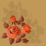 De achtergrond van de bloem, rozen Stock Afbeeldingen