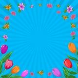 De achtergrond van de bloem, tulpen Stock Fotografie