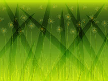 De Achtergrond van de Bloem van het gras Stock Foto's