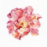 De achtergrond van de bloemwaterverf Abstracte bloemenachtergrond album Royalty-vrije Stock Afbeelding