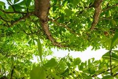 De achtergrond van de boom Stock Fotografie