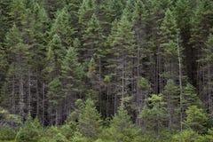 De achtergrond van de boom Royalty-vrije Stock Afbeelding