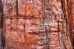 De Achtergrond van de boomschors Stock Afbeelding