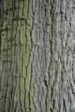 De Achtergrond van de boomschors Stock Foto