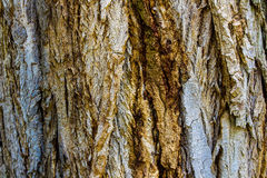 De Achtergrond van de boomschors Stock Foto's