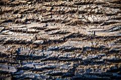 De Achtergrond van de boomschors Royalty-vrije Stock Fotografie