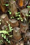 De achtergrond van de boomstomp Stock Afbeelding