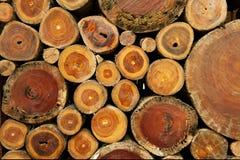 De achtergrond van de boomstomp Royalty-vrije Stock Foto