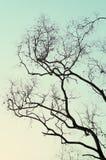 De achtergrond van de boomtak Royalty-vrije Stock Foto