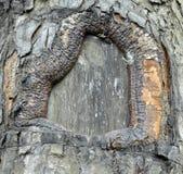 De achtergrond van de boomtextuur, Stock Fotografie