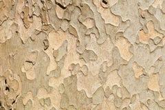 De achtergrond van de boomtextuur Stock Foto's