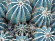 De achtergrond van de cactus Stock Foto's