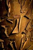 De Achtergrond van de cipresschors Royalty-vrije Stock Foto's