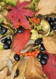 De Achtergrond van de Collage van de herfst Stock Afbeelding
