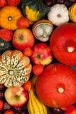De achtergrond van de dankzegging met pompoenen Stock Afbeelding