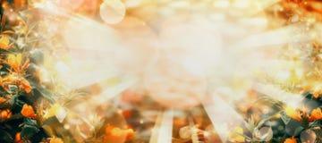 De achtergrond van de de herfstaard met gele bloemen en gebladerte in tuin of park Stock Foto's
