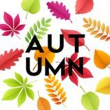 De achtergrond van de de herfstbanner met document dalingsbladeren Vector illustratie Stock Fotografie