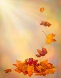 De achtergrond van de de Herfstdaling van de herfstbladeren in het uitstekende concept van de stijlherfst Royalty-vrije Stock Afbeeldingen