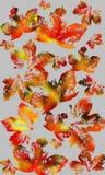De achtergrond van de de herfstkleur Stock Afbeeldingen