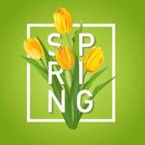 De Achtergrond van de de lentebloem met Tulpen Stock Foto