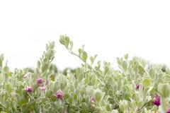 De achtergrond van de de lentebloesem Stock Foto