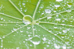 De Achtergrond van de de Textuuraard van het bladwater Royalty-vrije Stock Foto