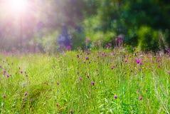 De achtergrond van de de zomerweide Royalty-vrije Stock Foto