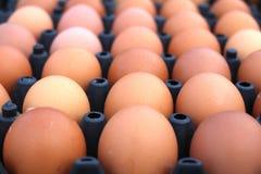 de achtergrond van de eierenkip Royalty-vrije Stock Foto's