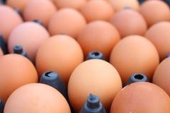 de achtergrond van de eierenkip Royalty-vrije Stock Afbeelding