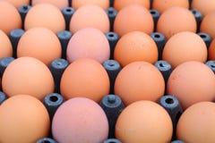 de achtergrond van de eierenkip Stock Foto