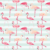 De Achtergrond van de flamingovogel Stock Fotografie