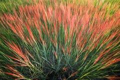 De achtergrond van de grasbloem Royalty-vrije Stock Foto's