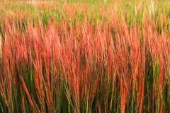 De achtergrond van de grasbloem Royalty-vrije Stock Afbeeldingen