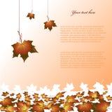 De achtergrond van de herfst. Stock Afbeelding
