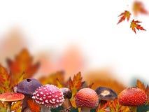 De achtergrond van de herfst Royalty-vrije Stock Foto's