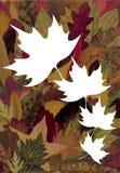 De achtergrond van de herfst Royalty-vrije Stock Foto
