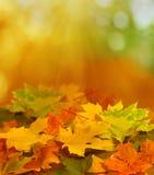 De achtergrond van de herfst Stock Fotografie