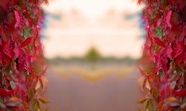De achtergrond van de herfst Royalty-vrije Stock Fotografie