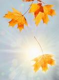 De achtergrond van de herfst Stock Afbeelding