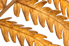 De achtergrond van de herfst. stock fotografie