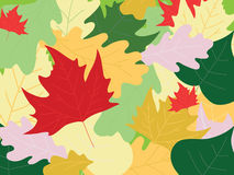 De achtergrond van de herfst met bladeren stock fotografie