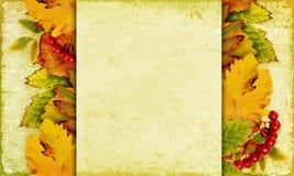 De achtergrond van de herfst met bladeren en bessen Royalty-vrije Stock Afbeelding