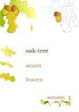 De achtergrond van de herfst met eiken boom Stock Afbeeldingen