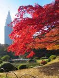 De achtergrond van de herfst met esdoornbladeren Royalty-vrije Stock Foto