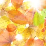 De achtergrond van de herfst met esdoornbladeren plus EPS10 Stock Foto's