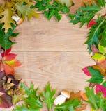 De achtergrond van de herfst met paddestoelen Royalty-vrije Stock Foto